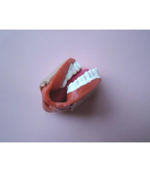Pohyblivé modely ústní dutiny